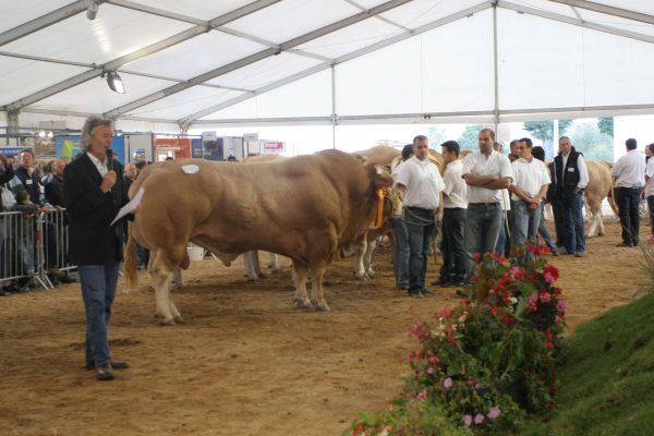 National cattle competition
