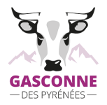Gascon of the Pyrenees